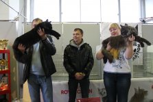 "Cat show ""Million Hearts on OktoberCatFest"""