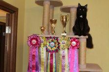 """Міжнародна виставка котів """"Березневі котики"""" 26-27 березня 2016 року, м. Хмельницький"""