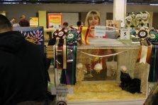 """Фото с Международной выставки кошек """"Осеннее очарование"""", 8-9 ноября 2014г."""