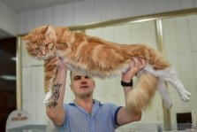 "Cat show ""Trophy of Odessa 2017"" 09-10 of september 2017"