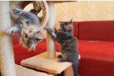 Hayden Perfect Cat*UA