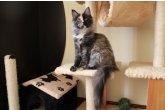 Halma Perfect Cat*UA