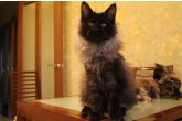 Hilton Perfect Cat*UA