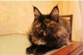 Haifa Perfect Cat*UA