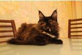 Haifa Perfect Cat*UA