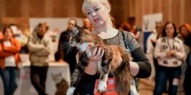Выставка кошек г. Ровно, 28-29 октября 2017г.
