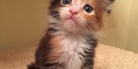 01.12.2018г. в нашем питомнике родились котята.