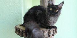 Кошечка Doris свободна и ждёт своих будущих хозяев!