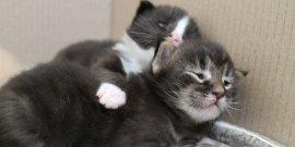 У нас родились котята!